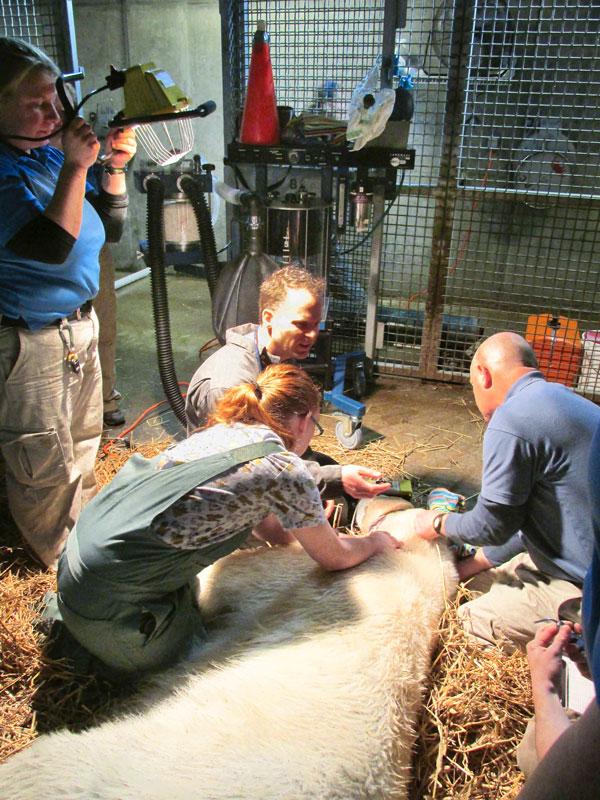 Las-4000 Large Animal Anesthesia Machine